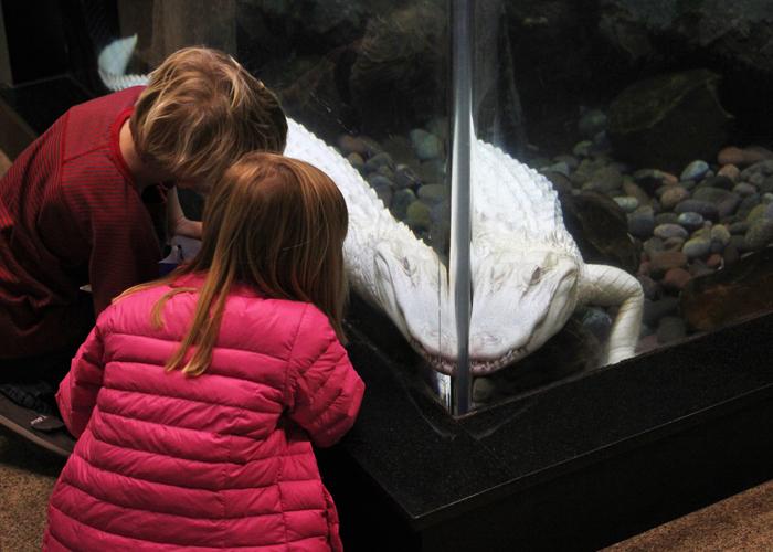 Dallas Children's Aquarium