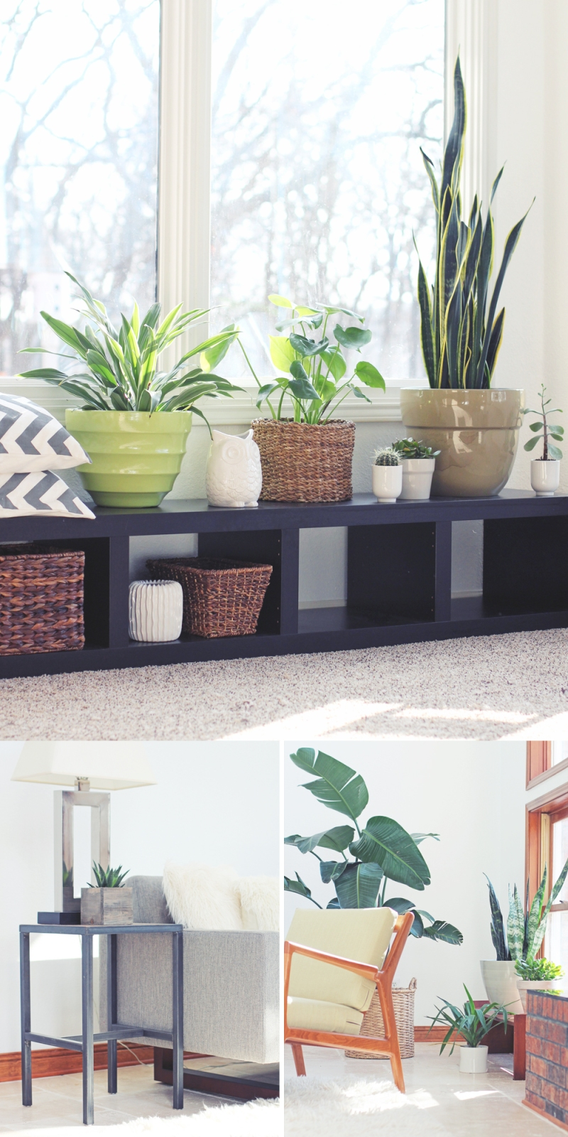 indoor houseplant help: tips and resources for indoor plants
